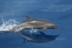 Dolphin and Whale watching cruises NJ